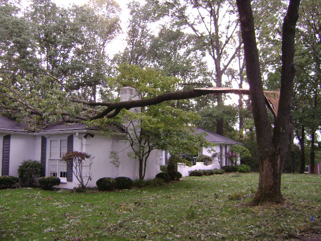 branch falling on house