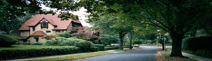 Tree Images Cincinnati Cincinnati Tree Services